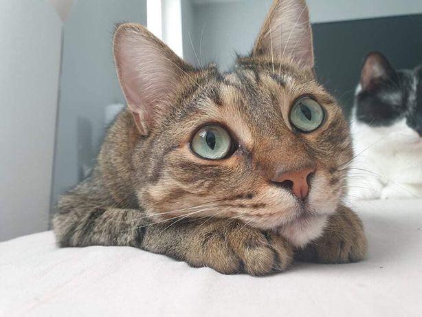 Typon i Aniela kociaki do adopcji