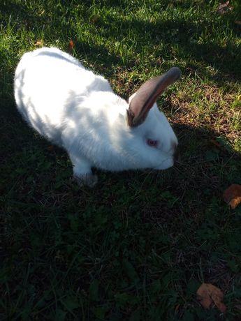 Тушки кролика.молодняк.