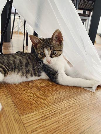 Кошеня котик в добі руки