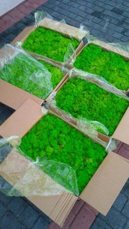 Стабилизированный мох. В розницу 0.5 кг. Мох для декора. Мох ягель