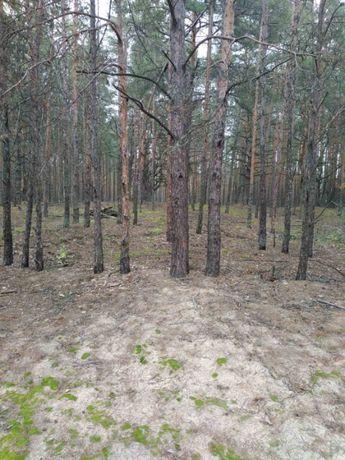 Выход в лес, Круги, 25 соток, для строительства