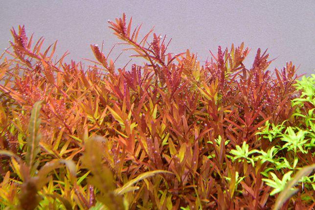 Plantas de aquário _ Qualidade TOP