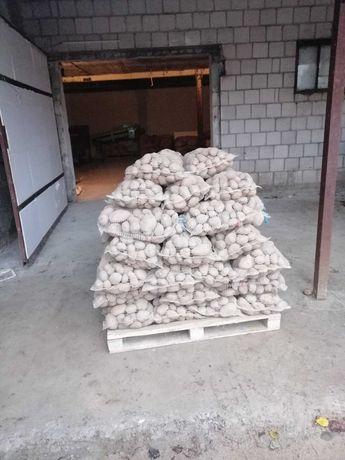 sprzedam ziemniaki katania wineta