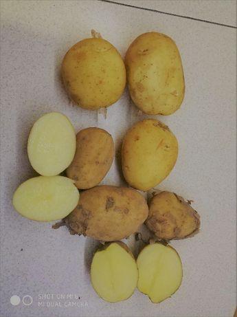 Promocja Swojskie smaczne Ziemniaki tegoroczne kopane z pola