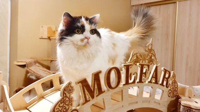 Кошки  в добрые руки Ужгород