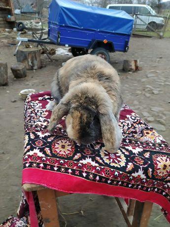 Продаються кролики