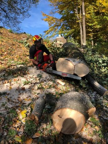 Wycinka drzew / alpinistyczne / zwyżka / przycinanie gałęzi / wywoz