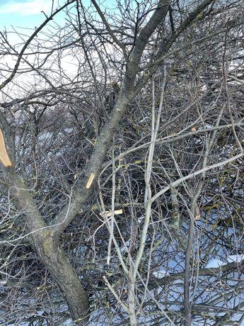 Oddam gałęzie i konary drzew liściastych - bez liści.