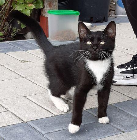 Znakeziony mały kotek szuka właściciela starego lub nowego.