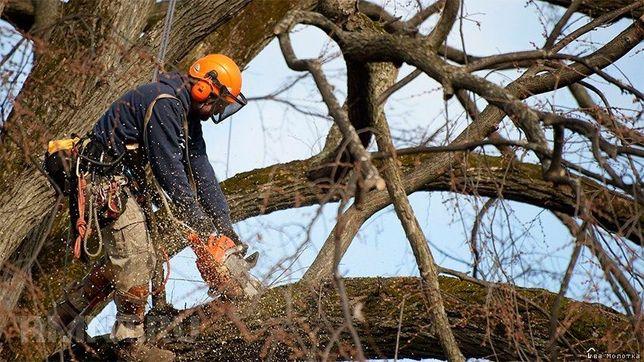 Спил деревьев,расчистка участка,корчевание.Услуги любой стройтехники