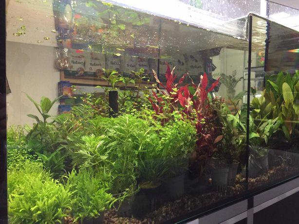Rośliny akwariowe MIX