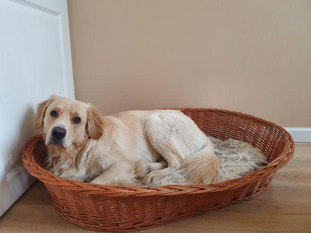 Bardzo duże legowisko dla psa dużej rasy wiklinowe labrador golden