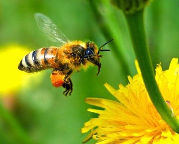 Продам пчелосемьи кто заинтересован  звоните.