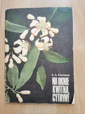 Na oknie kwitną cytryny S.A. Pieniążek