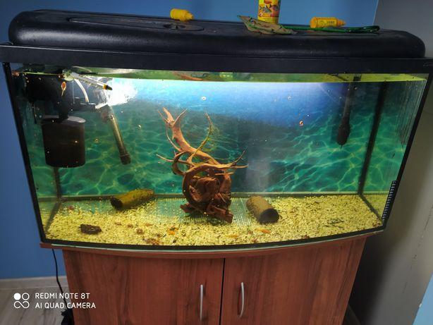 Akwarium 200l+szafka +wyposażenie+rybki