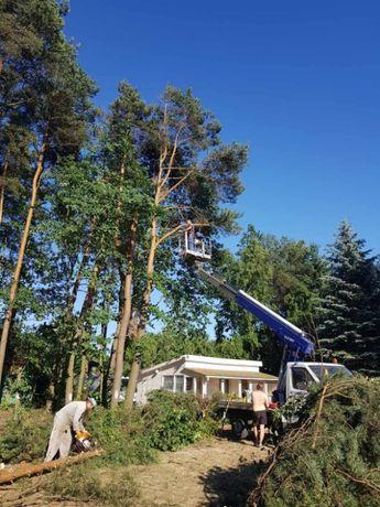 Wycinka drzewa, usługi rębakiem