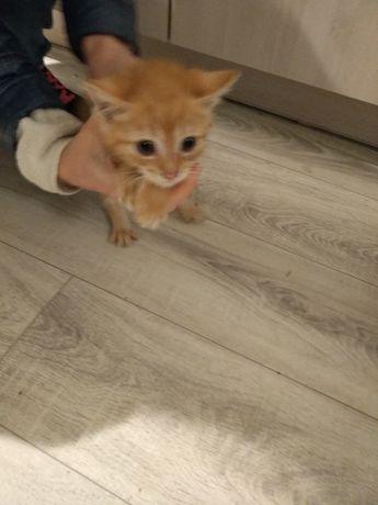 Oddam rudego kotka w dobre ręce