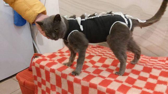 Ветеринарна допомога виїзд