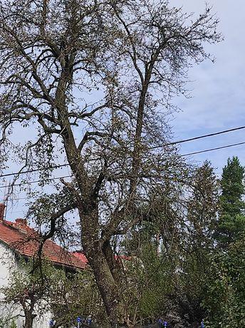 Drzewo, drewno na opał, wycinka