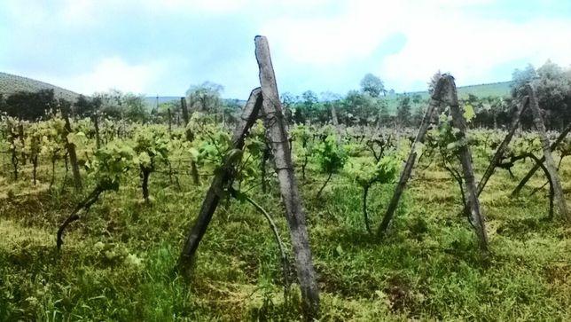 Эксклюзив!!!продам ОСГ со старыми виноградниками!!! Закарпатье!!!