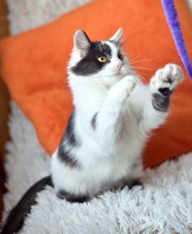 Котенок Мася ищет дом