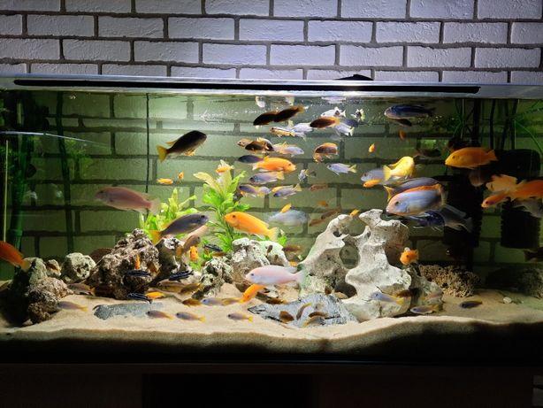 Akwarium 300l malawi zestaw