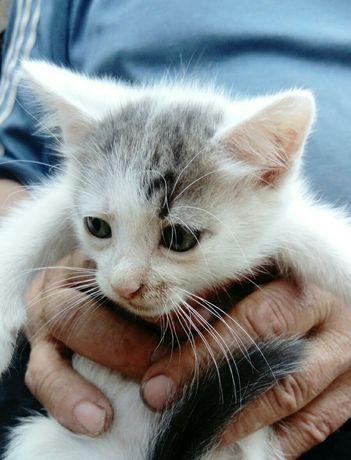 Ручной ласковый котик