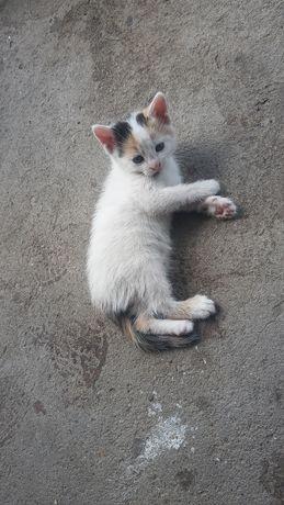 Oddam w dobre ręce śliczne kotki