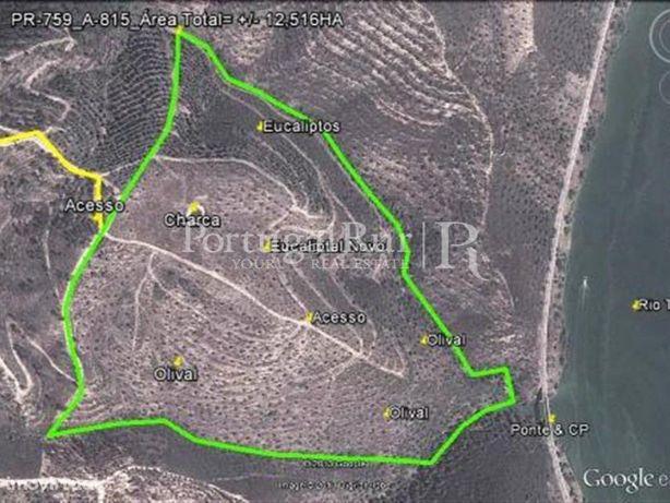 Herdade com 12 hectares com plantação de eucaliptos