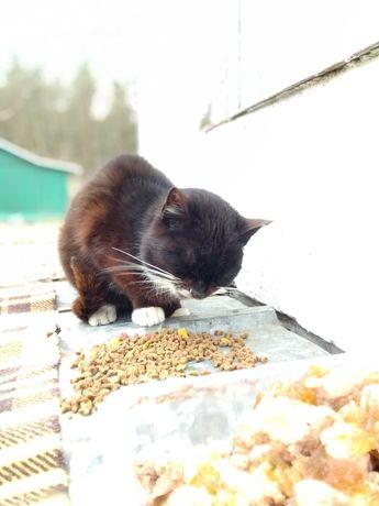 Kotka  z działek potrzebuje domu