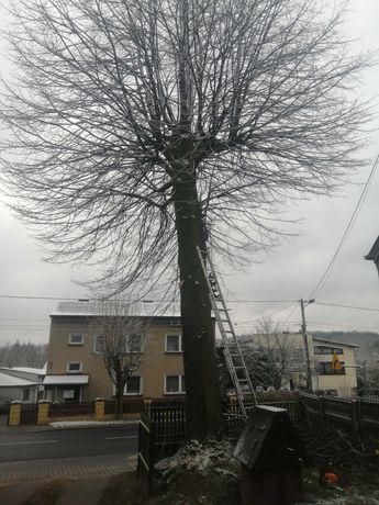 Wycinka drzew, pielęgnacja, czyszczenie działek, przecinki, rębak