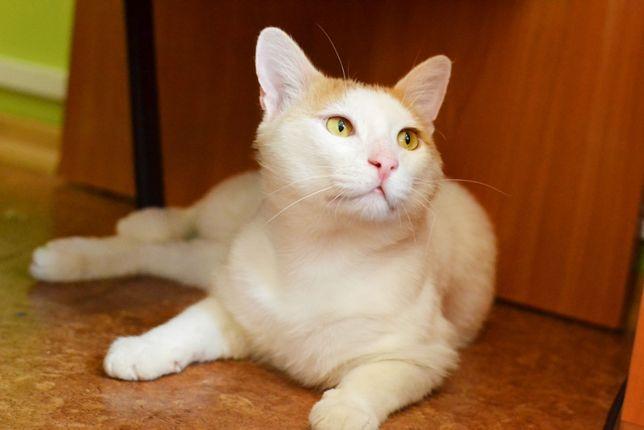 Очаровательный ласковый кот Мачо, 1,5 годика, кастрирован