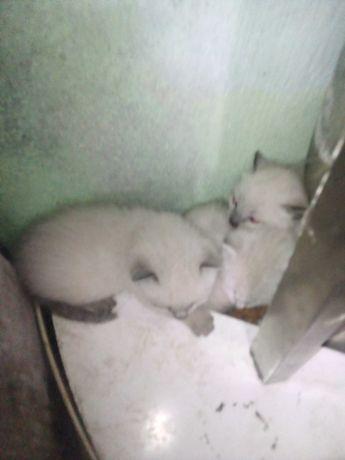 Gatos bebés 1 mês