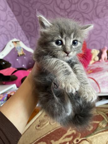 Подарим милых котят