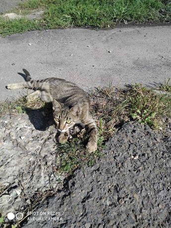 potrzebny kochający domek dla Tygryska z kopalni, porzucony, niczyj
