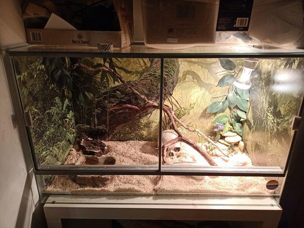 Wąż i terrarium sprzedam
