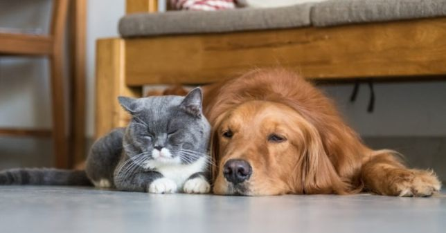 Hotel para cães e gatos em ambiente familiar