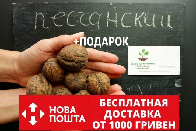 """Орех грецкий """"Песчанский"""" семена 10 шт для саженцев насіння горіх"""