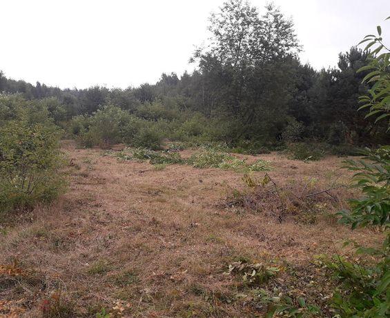 Czyszczenie działek/Wycinka drzew,przycinanie gałezi. Mielenie gałęzi