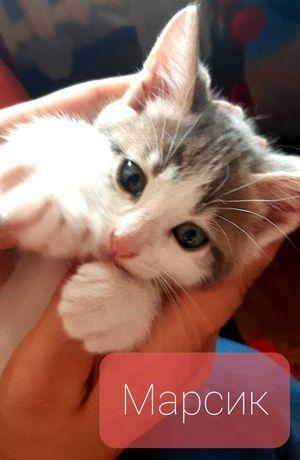 Котенок, мальчик 3 мес. Только в любящую семью