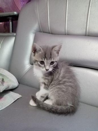 Отдам милых котят в хорошие руки