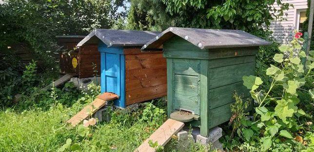 Sprzedam pszczoły na ramce warszawskiej