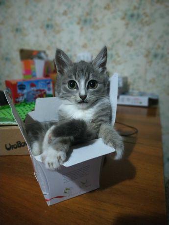 Віддам кошенятко