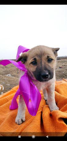 Отдам щенков в хорошие руки (щенок щенки собака)
