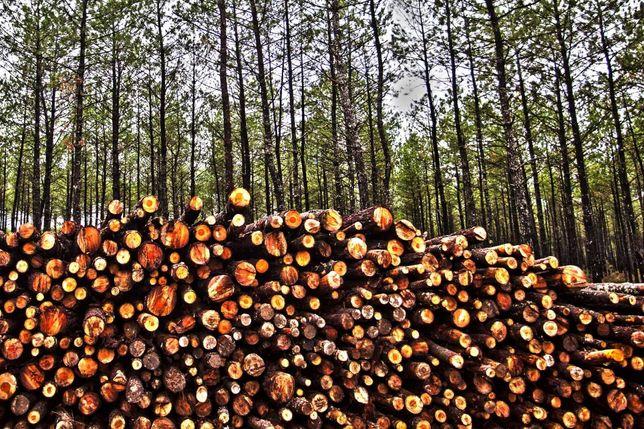 Exploração florestal