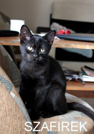 Czarne piękności do adopcji