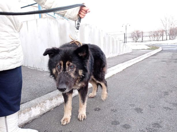 Найден слепой пес