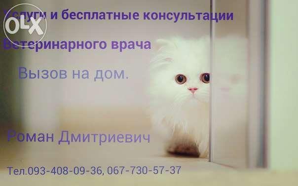 Вызов ветеринара О67-7ЗО-57-З7 на дом Харьков и пригород.