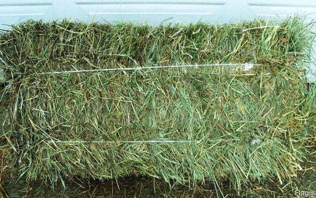 Продам тюки сіна, соломи пшеничної та ячмінної. Можлива доставка.