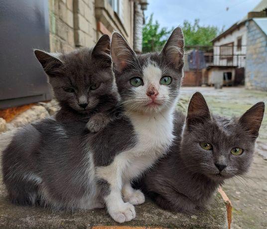 Отдам котят / Віддам кошенят
